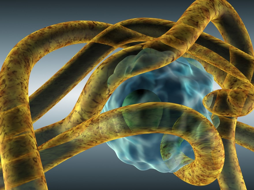 Grybelinės ligos